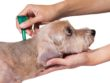 How To Get Rid Of Dog Lice